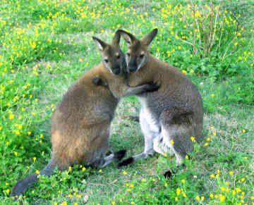 animal-embrace